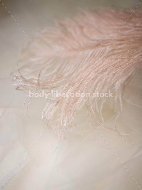 Romance Stock Photo: Soft Pink Ostrich Feather - Body Liberation Photos