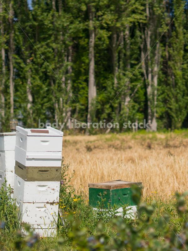 Beehives at berry farm - Body Liberation Photos