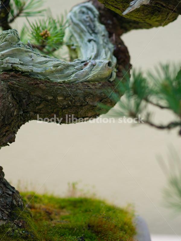 Stock Image: Bonsai Tree - Body Liberation Photos