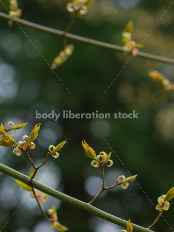 Stock Photo: Spring Garden - Body Liberation Photos