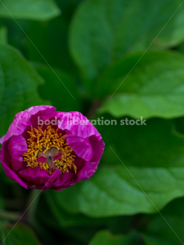 Stock Photo: Spring Garden with Room for Text - Body Liberation Photos
