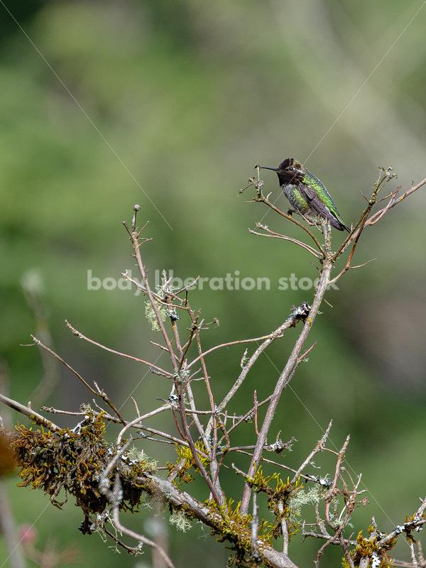 Hummingbird on a branch - Body Liberation Photos